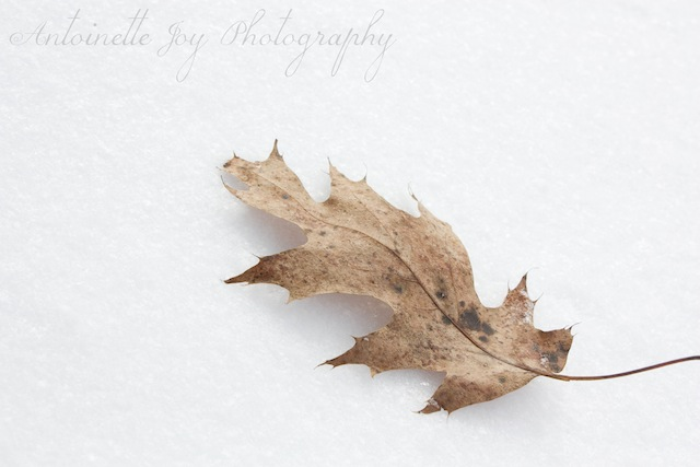 Leaf In Snow HC (original)