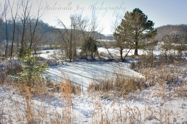 Winter 2014 (6) WM
