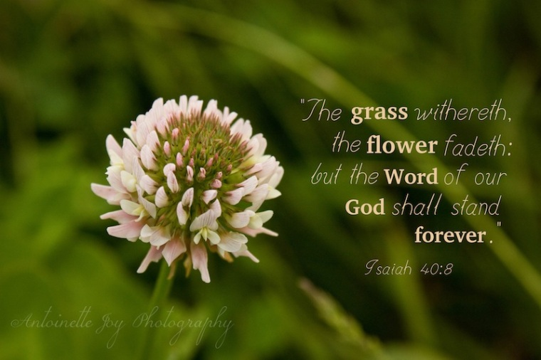 Clover Flower Isaiah